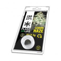 JELLY 22% CBD LEMON HAZE 3G
