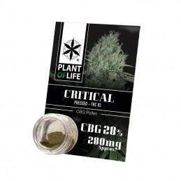 POLLEN CBG 28% CRITICAL 1G