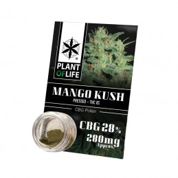 POLLEN CBG 28% MANGO KUSH 1G
