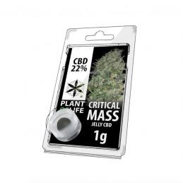 JELLY 22% CBD CRITICAL MASS 1G
